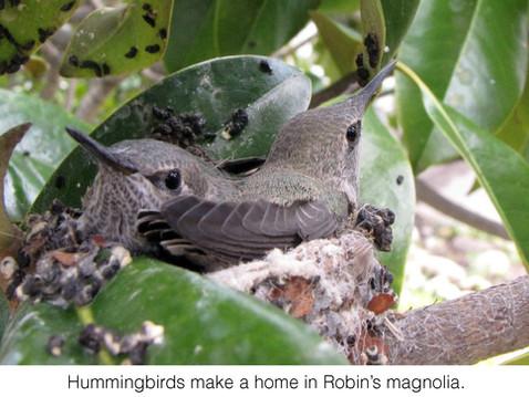 TREES, PLEASE: Do Birds Need Your Trees?
