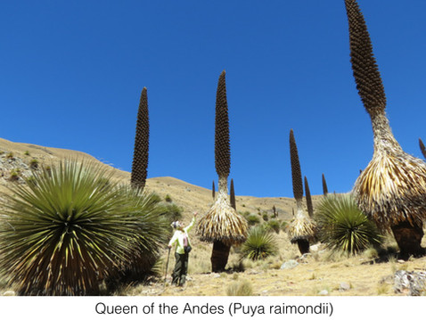 GUEST COLUMNIST: Bromeliads: Unique, Spectacular New World Plants