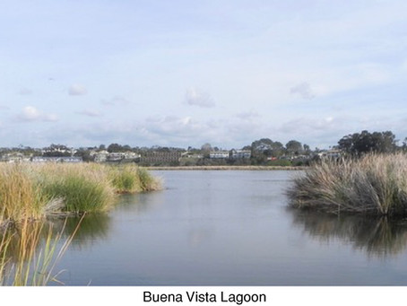 GUEST COLUMNIST: The Future of the Buena Vista Lagoon Habitat