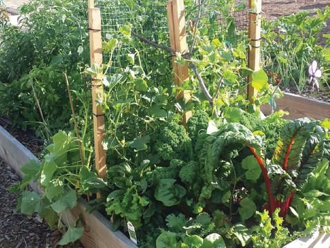 GROW WITH ABUNDANCE: Time Saving Tips for the Busy Gardener