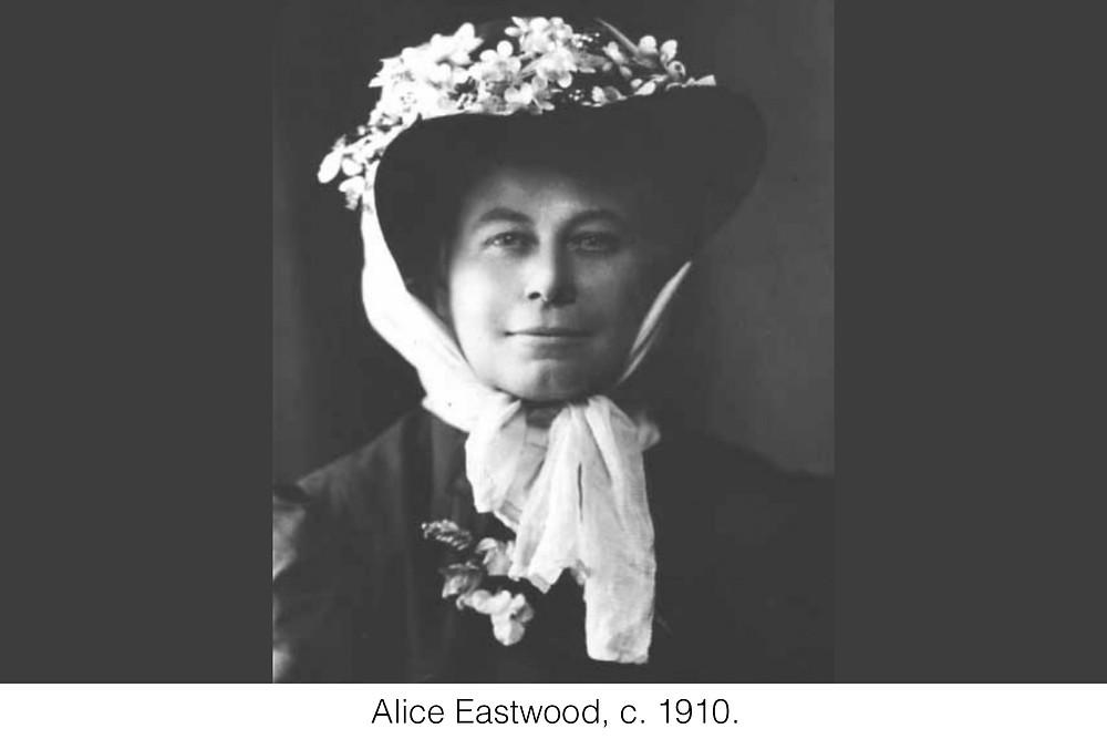 Alice Eastwood, c. 1910.