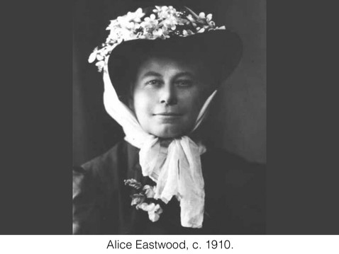 THE REAL DIRT ON: Alice Eastwood: Ardent Conservationist and Explorer