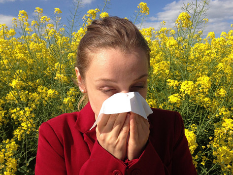TREES, PLEASE: Think Trees Are Making You Sneeze?