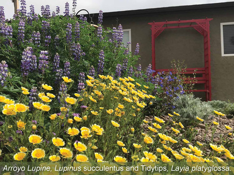 GOING WILD WITH NATIVES: The Extraordinary World of California Wildflowers