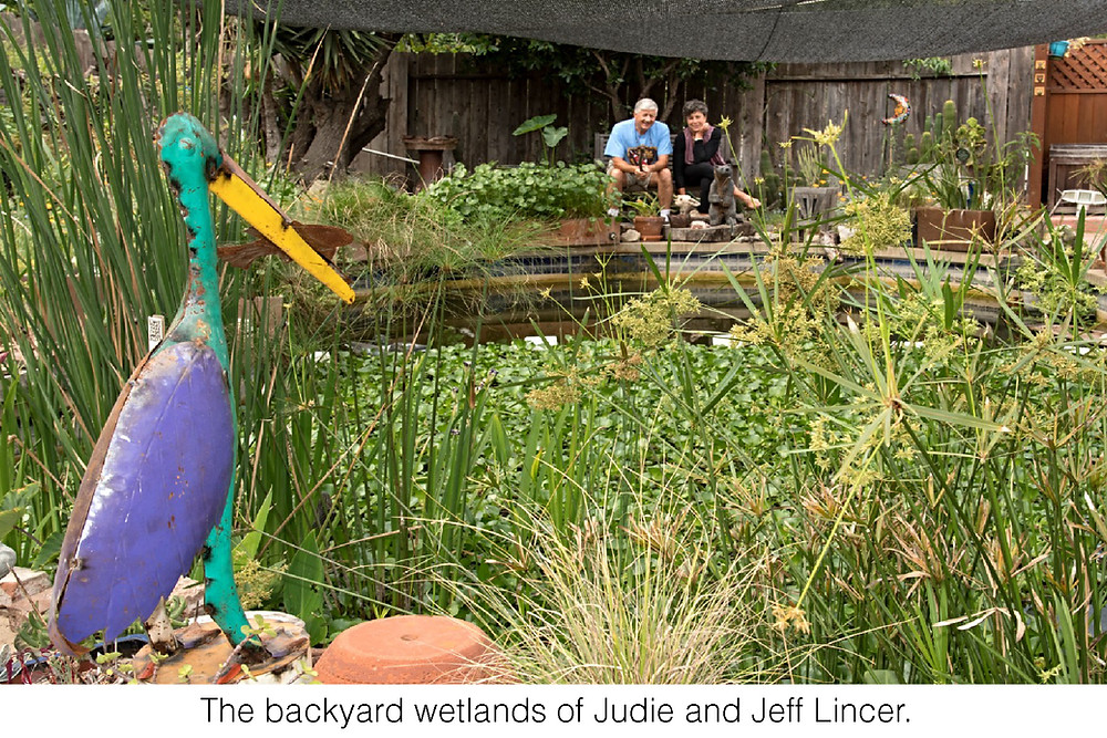 Judie Lincer and her husband, Jeff, enjoy their backyard wetlands.