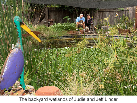 GUEST COLUMNIST: Backyard Wetlands: A Second Life for Yesterday's Pools