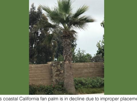 TREES, PLEASE: Arboreal Caveat Emptor
