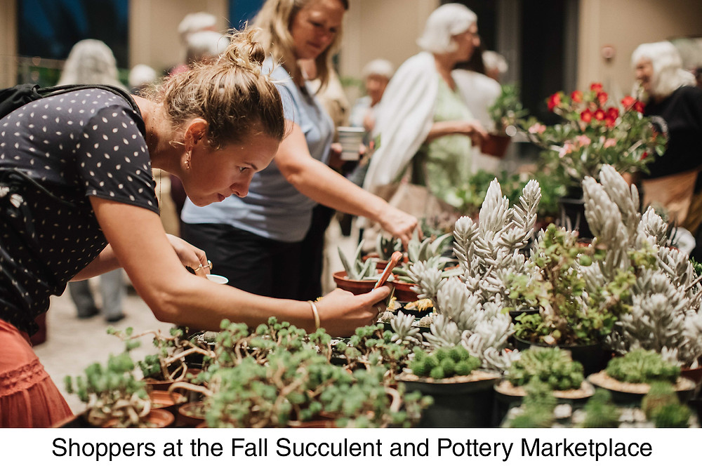 Shoppers make selections at the Succulent Plant and Pottery Faire.