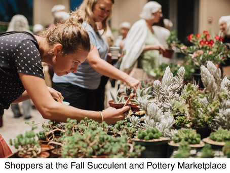 NEWS: March Succulent Plant and Pottery Marketplace
