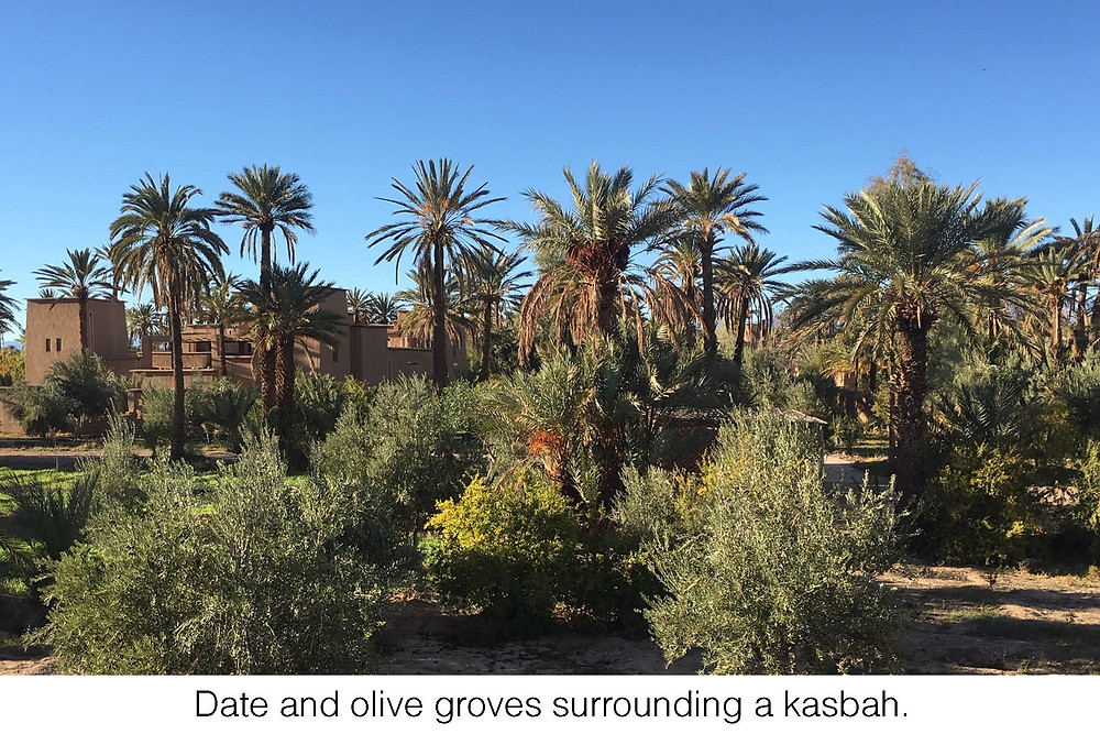 Date and olive groves surrounding a kasbah.