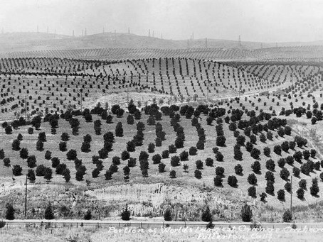 DECEMBER MEETING: Citrus in Southern California: A History and Growing Primer
