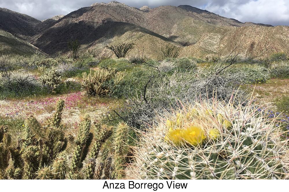 Anza Borrego View