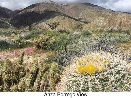 MY LIFE WITH PLANTS: Borrego Bonanza, Part I