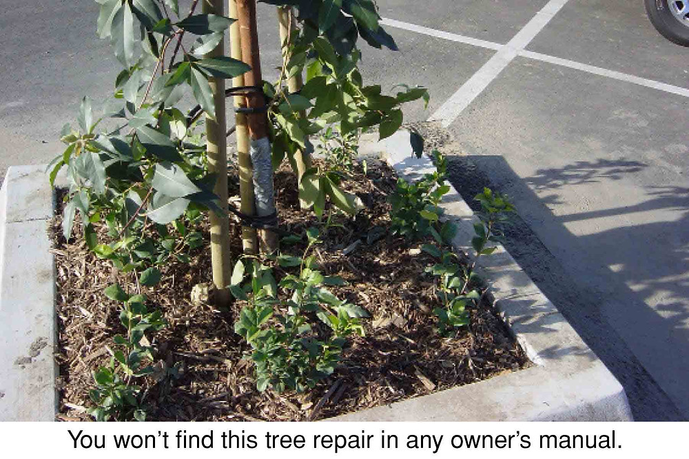 You won't find this tree repair in any owner's manual.