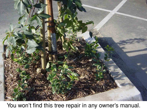 TREES, PLEASE: Consult the Manual!