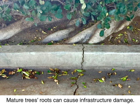 TREES, PLEASE: Examining the Root of the Problem