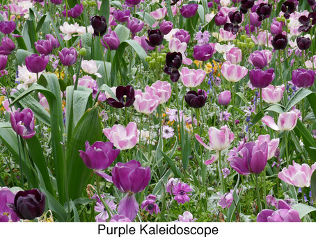 MY LIFE WITH PLANTS: Off to Keukenhof