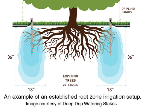 GOING WILD WITH NATIVES: Root Zone Irrigation for Oaks