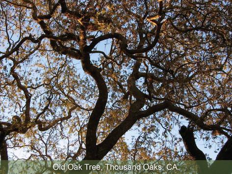 TREES, PLEASE: Tree Ordinances. Love them or leave them?