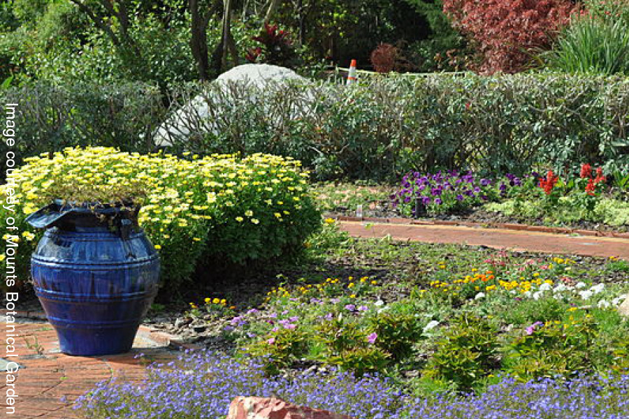 Image courtesy of Mounts Botanical Garden