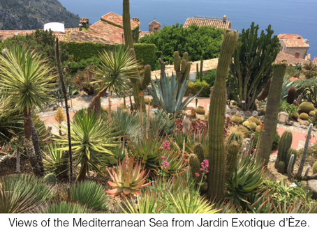 MY LIFE WITH PLANTS: Jardin Exotique d'Èze