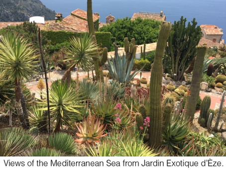 MY LIFE WITH PLANTS: Jardin Exotique d'Èze