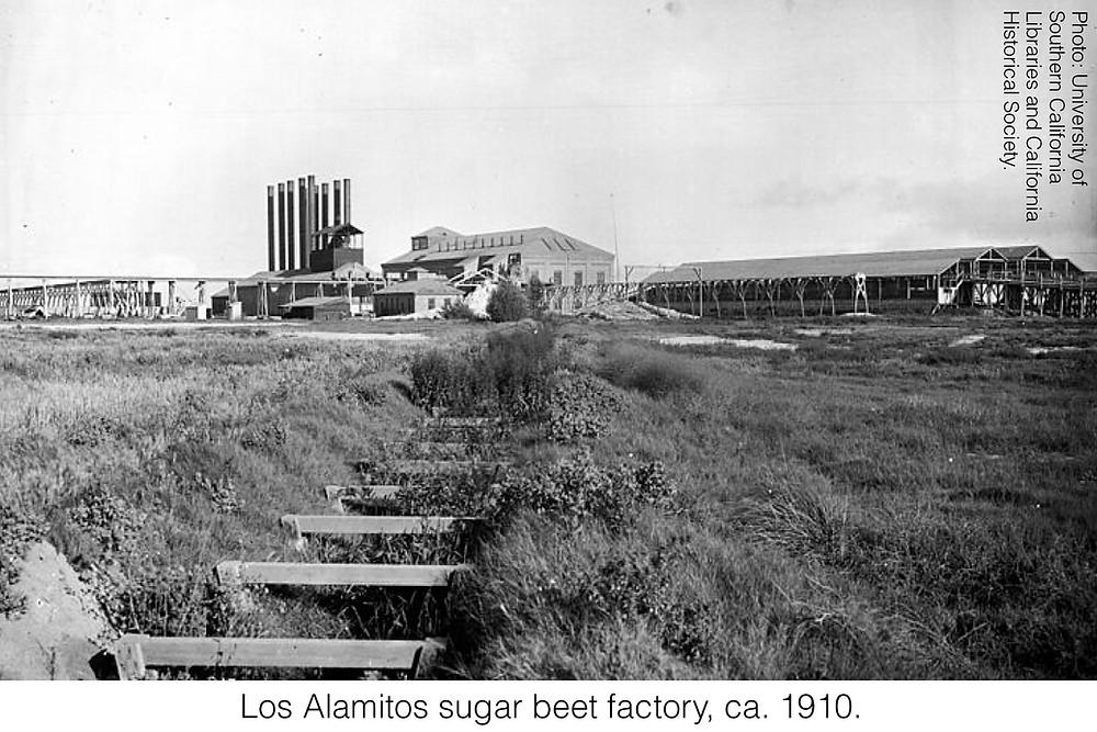 Los Alamitos sugar beet factory, ca. 1910. Photo credit: University of Southern California Libraries and California Historical Society.