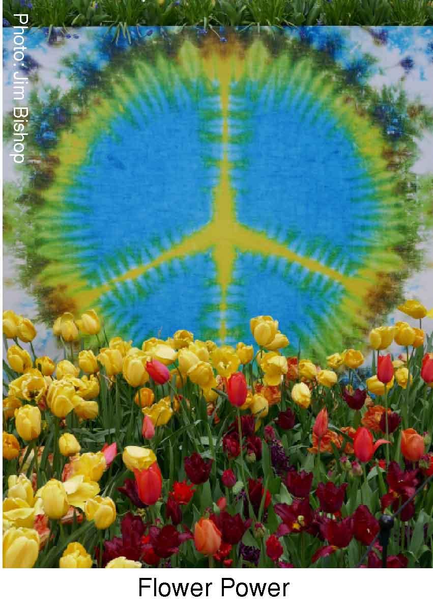 Flower Power.  Attribution: Jim Bishop.