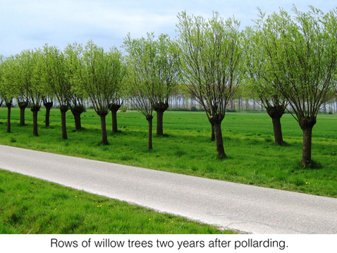 TREES, PLEASE: The Million-Pollard Question