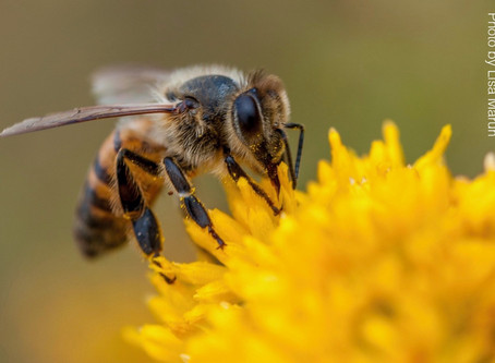 NEWS: Worker Bees Wanted
