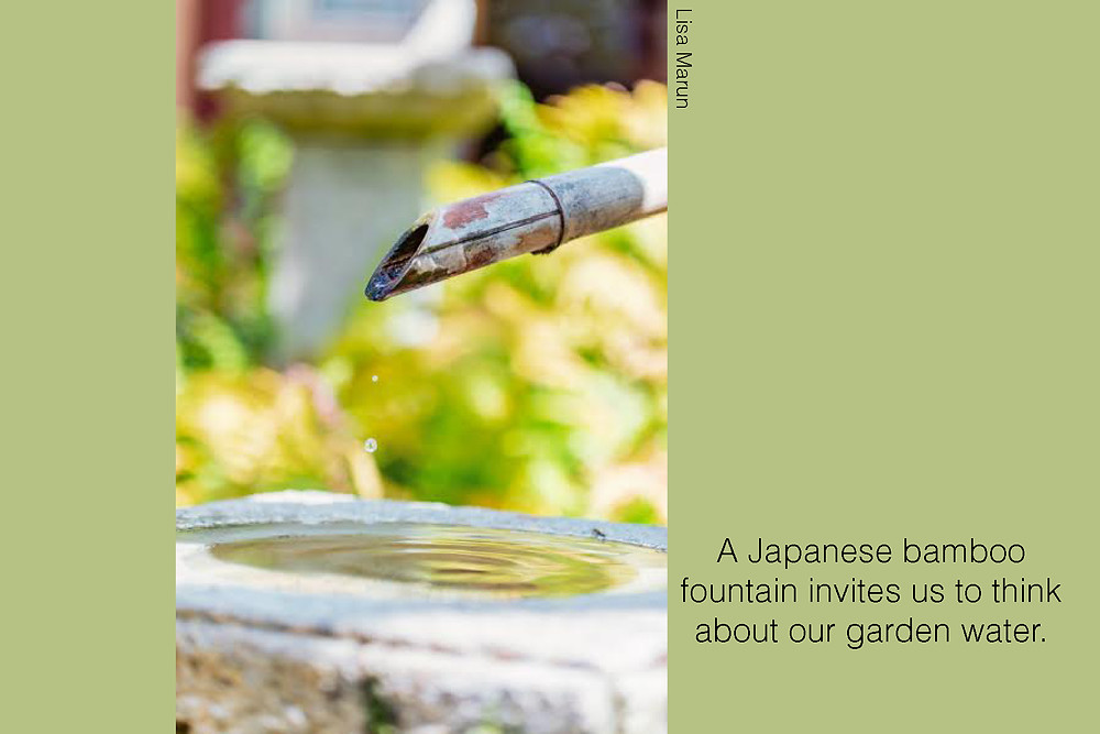 A Japanese bamboo fountain invites us to think about our garden water. Image courtesy of Lisa Marun.