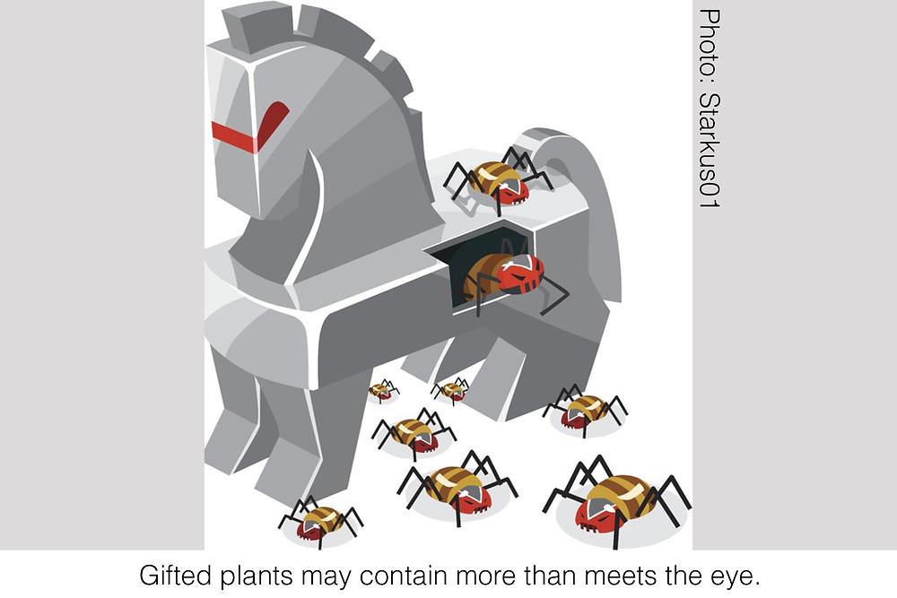Gifted plants may contain more than meets the eye. Image credit: Starkus01