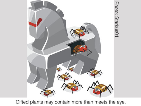 BUGS AND BUGABOOS: Beware the Trojan Plant
