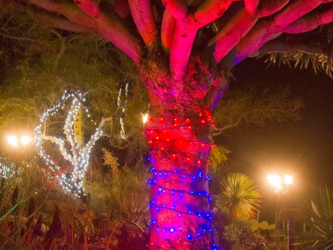NEWS: Experience the Magic of Garden of Lights