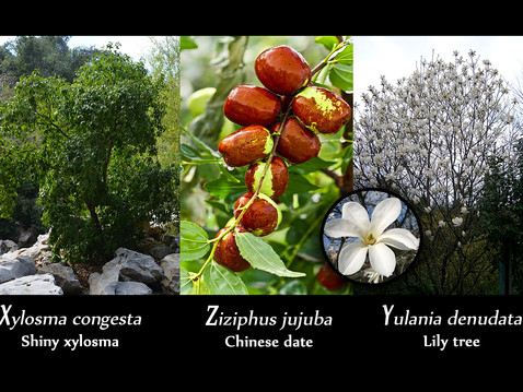 TREES, PLEASE: X, Y, Z: Distinctive Trees With Odd Names