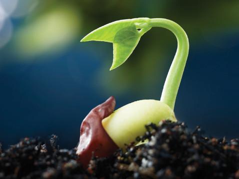 GROW WITH ABUNDANCE: Tips for Starting Seeds