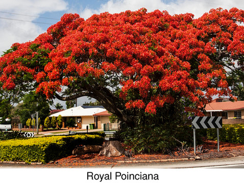 TREES, PLEASE: Hot-Hued Trees for Sizzling Summer Daze