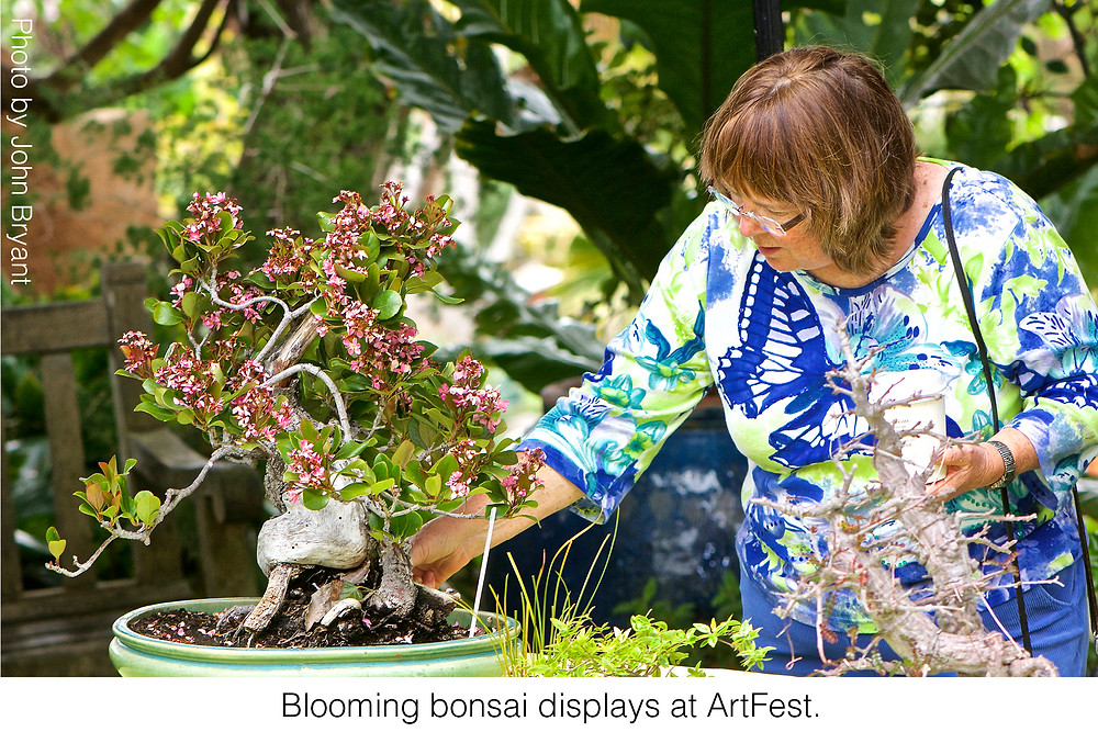 Blooming bonsai displays at ArtFest. Photo credit: John Bryant
