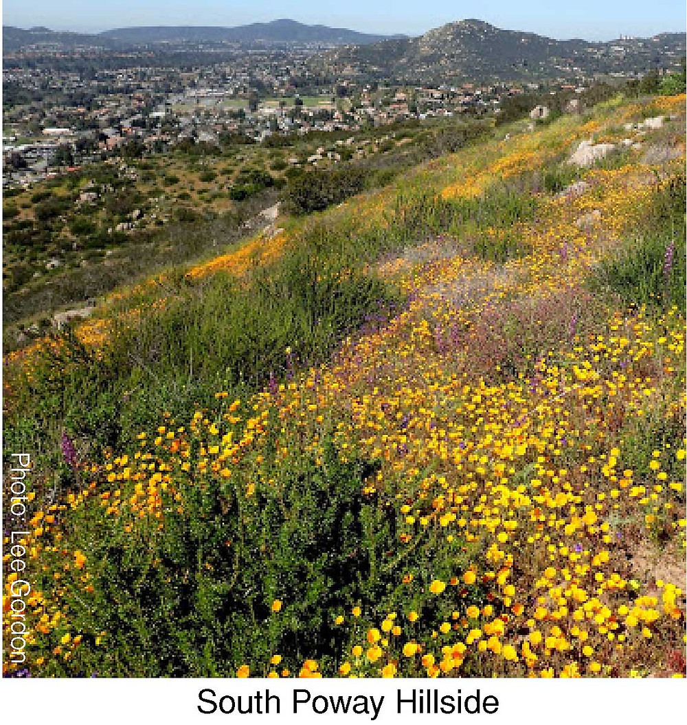 South Poway Hillside.  Photo credit: Lee Gordon