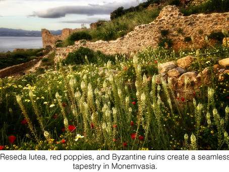 MY LIFE WITH PLANTS: The Other Grecian Formula