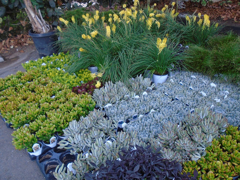 NEWS: Fall Plant Sales in San Diego