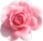 Light_Pink_Rose_PNG_Clipart.png