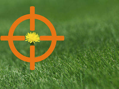 Lawn applications and weed control in Connersville, Indiana