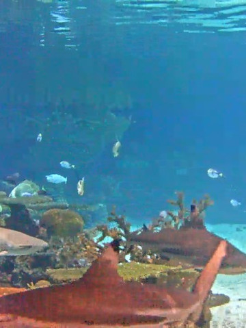 Live Feed: National Aquarium