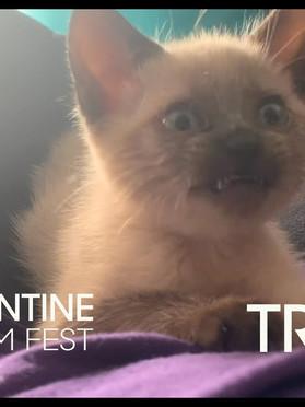 QUARANTINE CAT FILM FEST Sponsored by The Scratching Post Cat Cafe