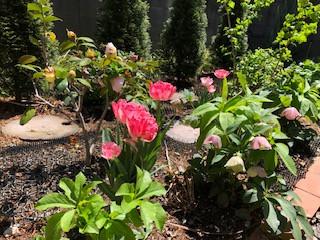 春の庭、百花繚乱の予感