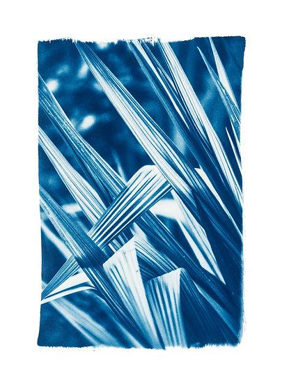 Divine geometry 1 //  Original Cyanotype