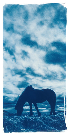 Silence // 14 // Original Cyanotype Print