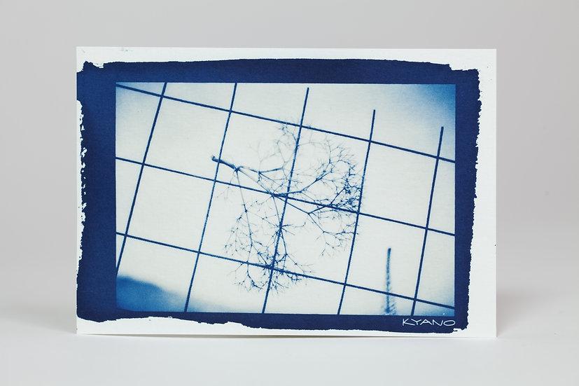 """Grid"" cyanotype postcard"