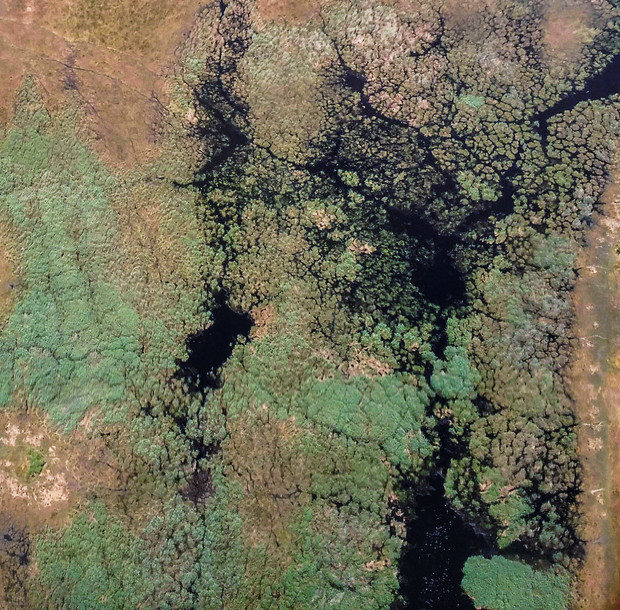 peau-botswana.jpg